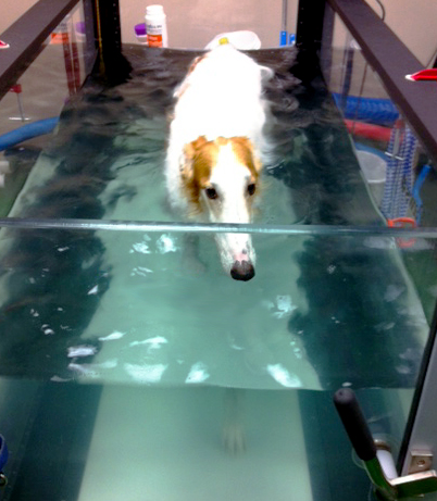 Pup In Hydrotherapy